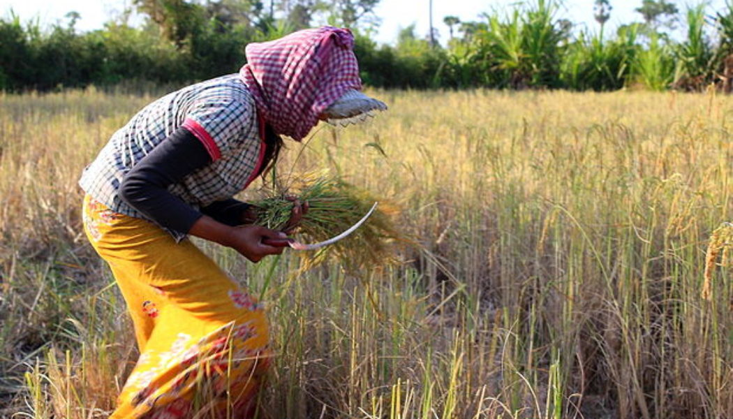 Report on Food Security in Cambodia